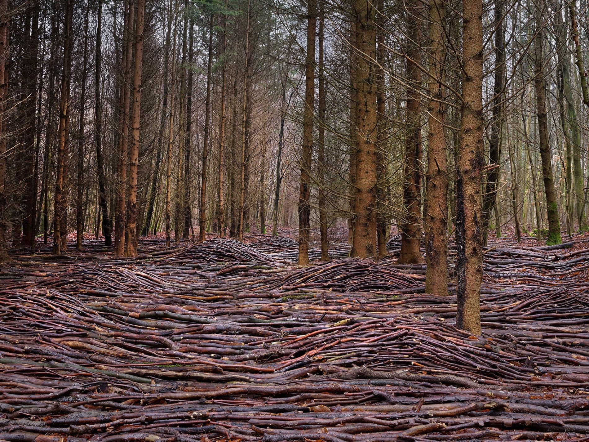 olas de madera fotografia Jörg Gläscher mar