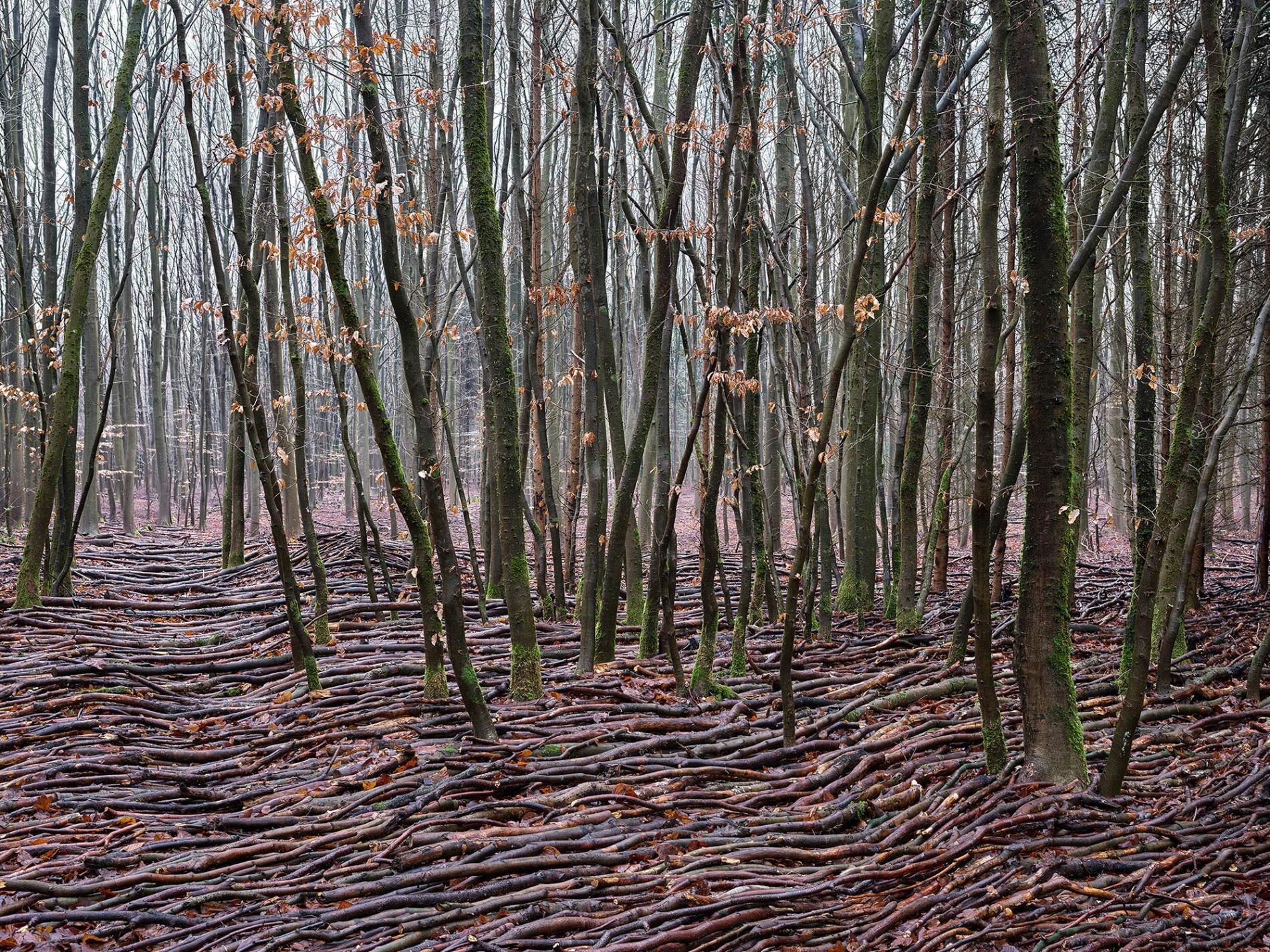 olas de madera fotografia Jörg Gläscher ondulado