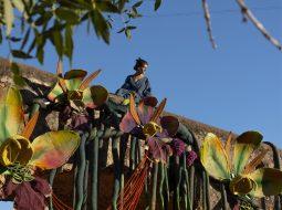 barragao instalacion orquideas 2