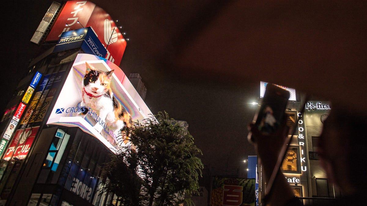cross shinjuku viison gato night