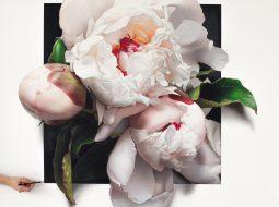 hendry flor blanca