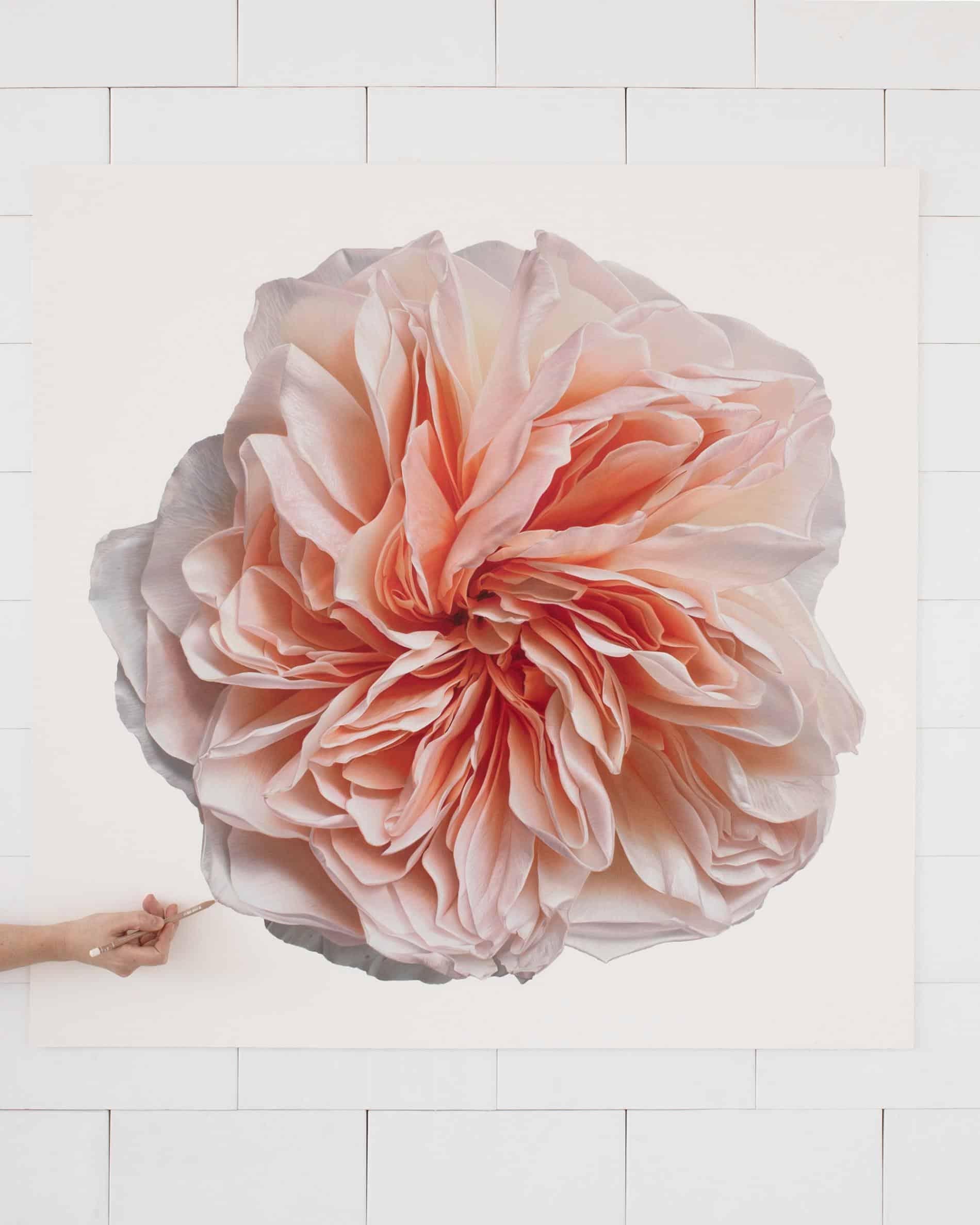hendry flor bloom detalle peach rose d