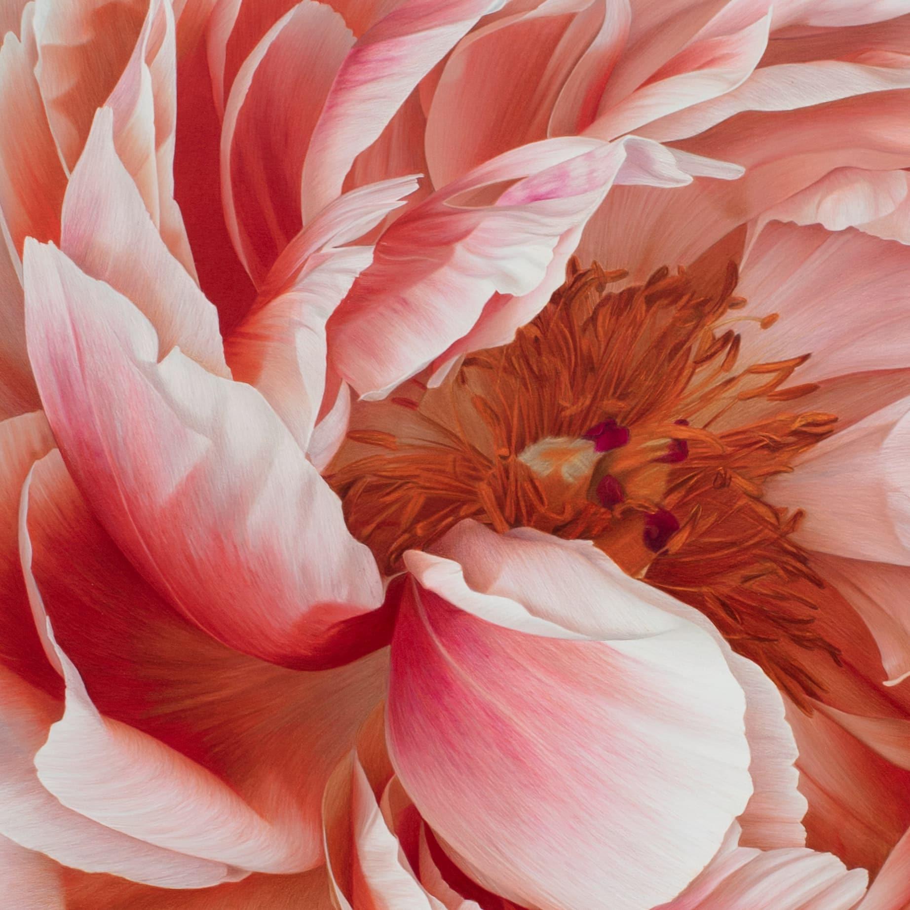 hendry flor bloom detalle
