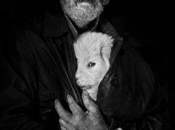 ransylvania retratos istvan kerekes doggie f