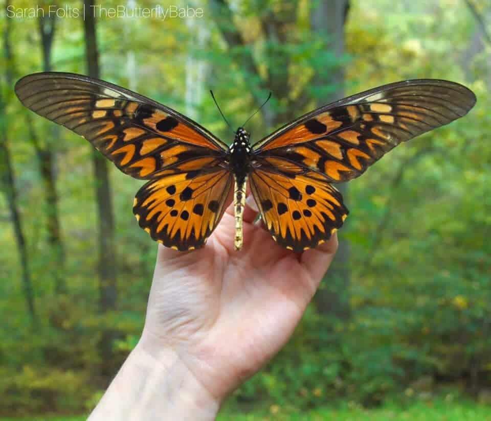 mariposa babe sarah