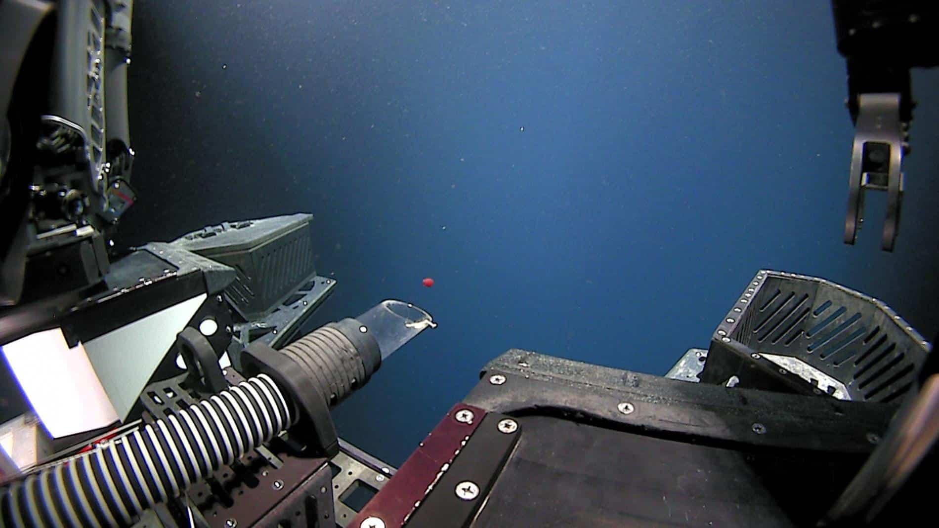 medusa roja descubierta noaa exploration
