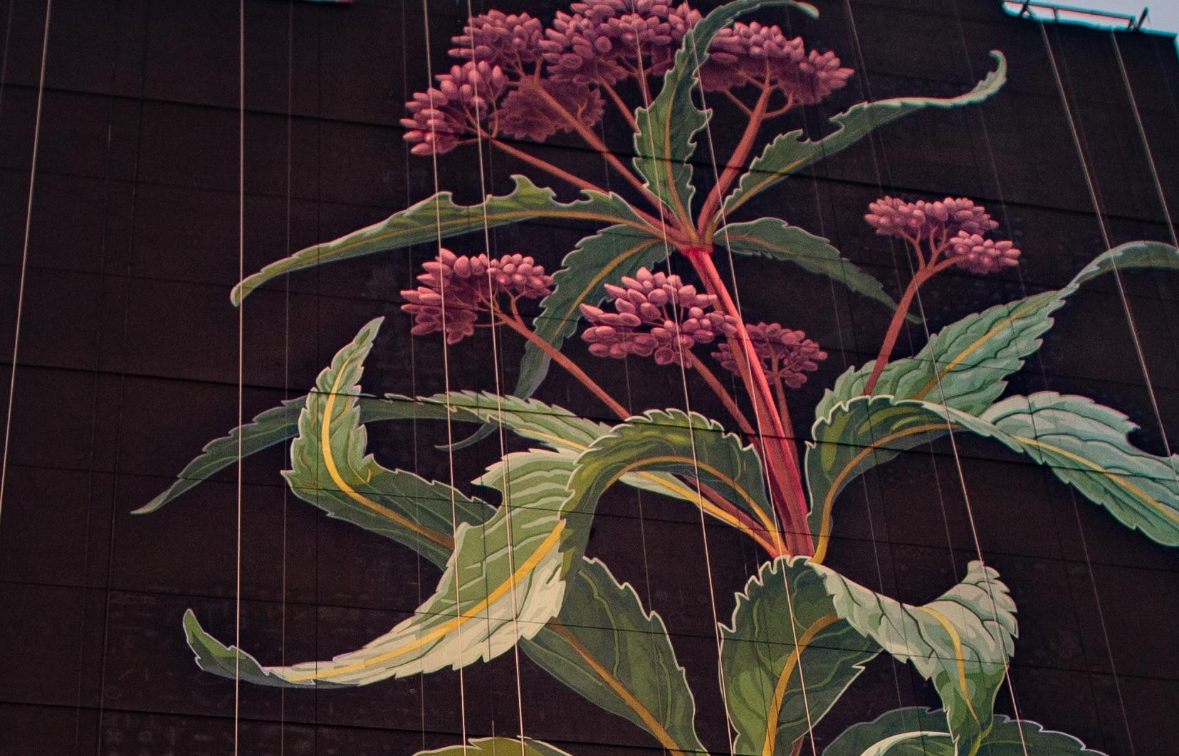 mona caron mural flor silvestre color
